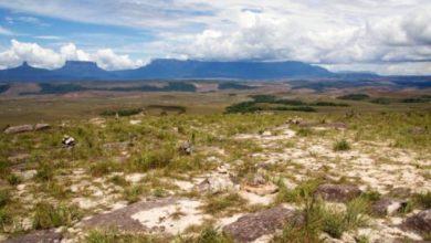 Mountain Roraima, Guyana