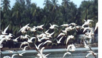 Olango Island Wildlife Sanctuary, Philippines