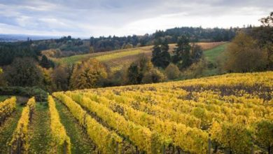 Oregon Wine Country - USA