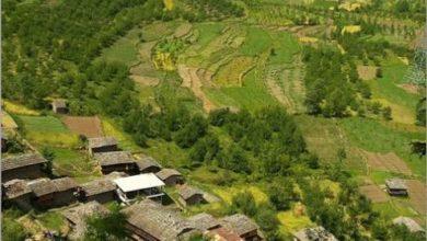 Raison - Himachal Pradesh