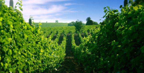 Stobi Wineries Macedonia
