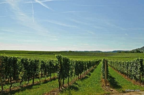 Macedonia should promote wine tourism