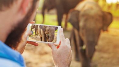 Photo of Unlocking the potential of African travel tourism through online services