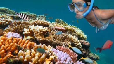 Photo of The unknown future of the Great Barrier Reef – Tourism calls for serious measures