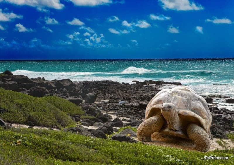 Galapagos Island.