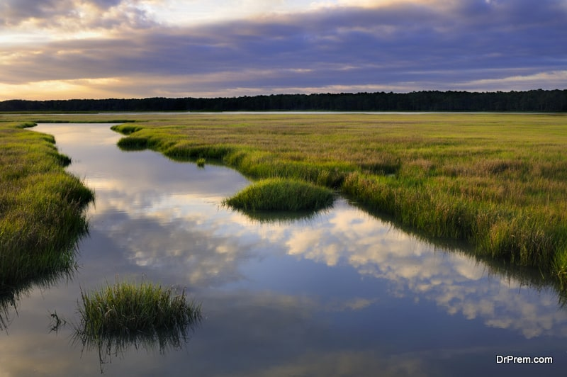 Virginia-Coast-Reserve-Virginia-US