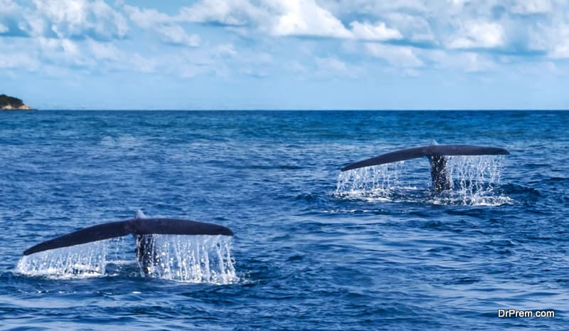 gala-sea-adventure-with-the-whales