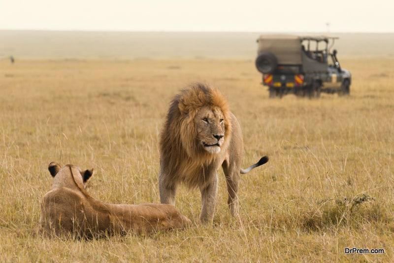 Masai-Mara-Safari-Kenya