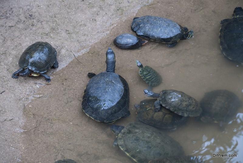 Participate in turtle conservation, Guatemala
