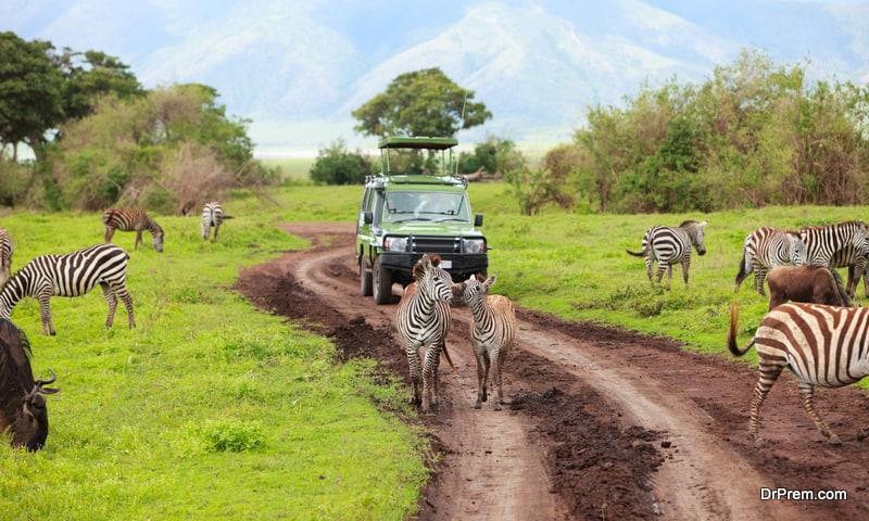 finding budget wildlife holidays