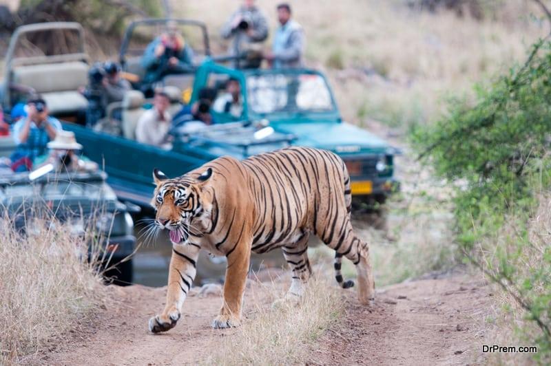 INDIA-species-of-the-feline-family