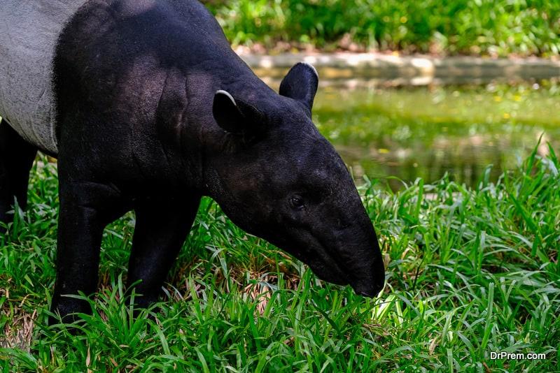 Malaysian-wild-life