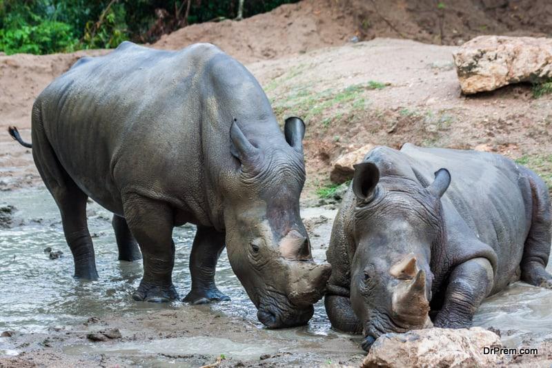 THAILAND-rhinoceros