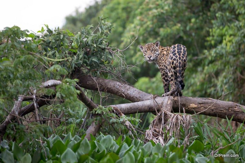 The-Pantanal