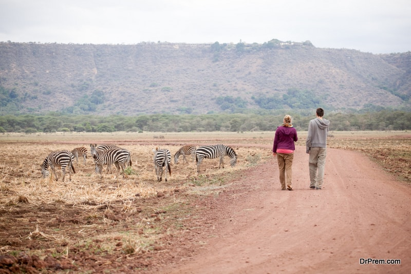 Wildlife expeditions and safaris in Africa