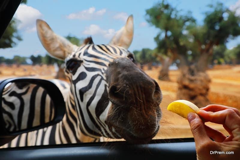 Hand feeding of animal