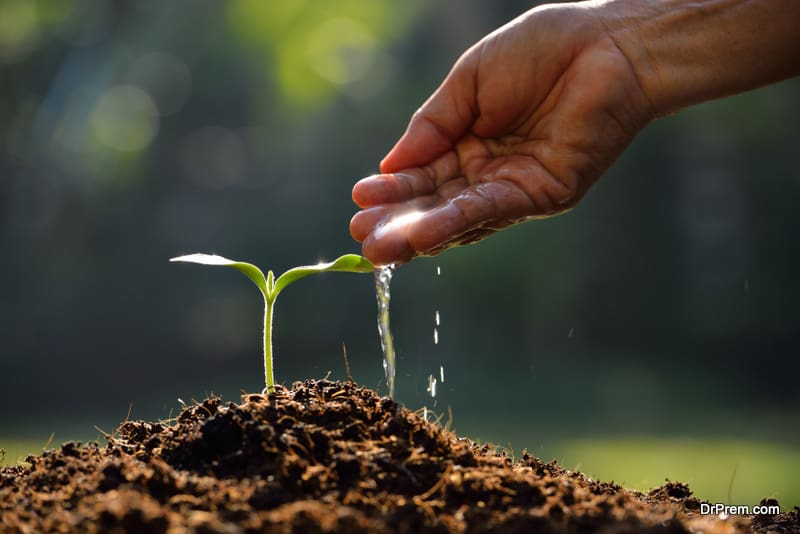 irrigating saplings