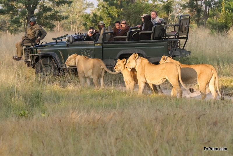 safari-holidays-in-South-Africa