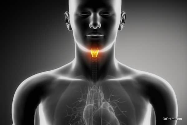 Human larynx anatomy