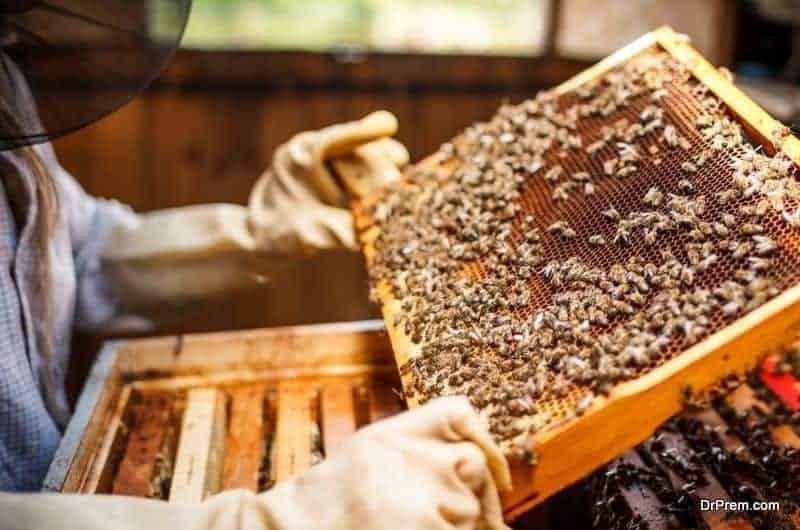apiary tourism