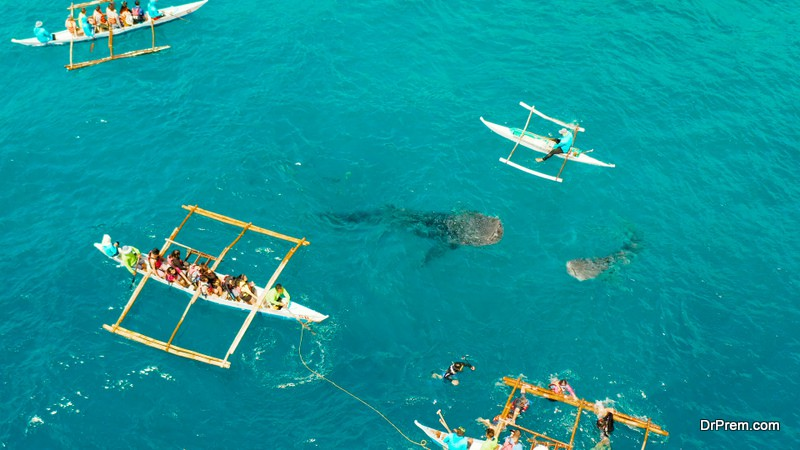 Oslob Whale Shark Watching in Philippines,