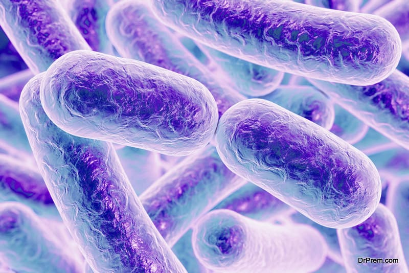 Lactobacillus has high potential in boosting immune response