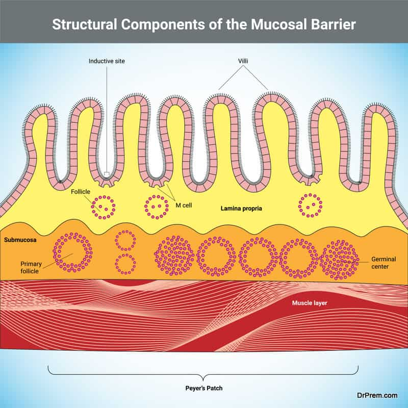 mucous membrane of the body