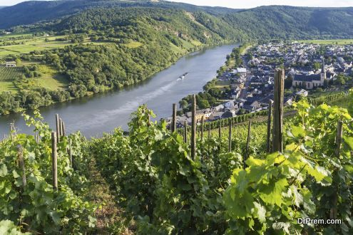 Vineyards of the Moselle River